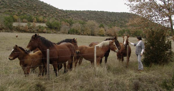 20091206232117-caballos2.jpg