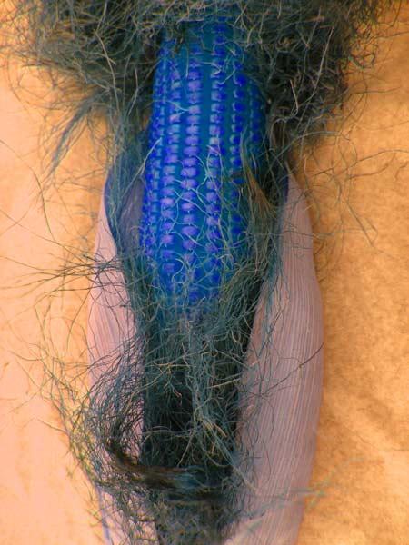 Mazorca azul.