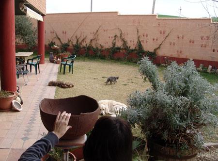 Perros y gatos en el jardín.