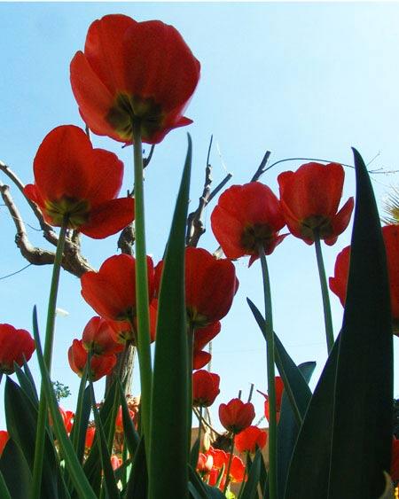 Primavera total.