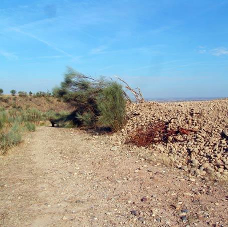 Caminos del Saso (2).